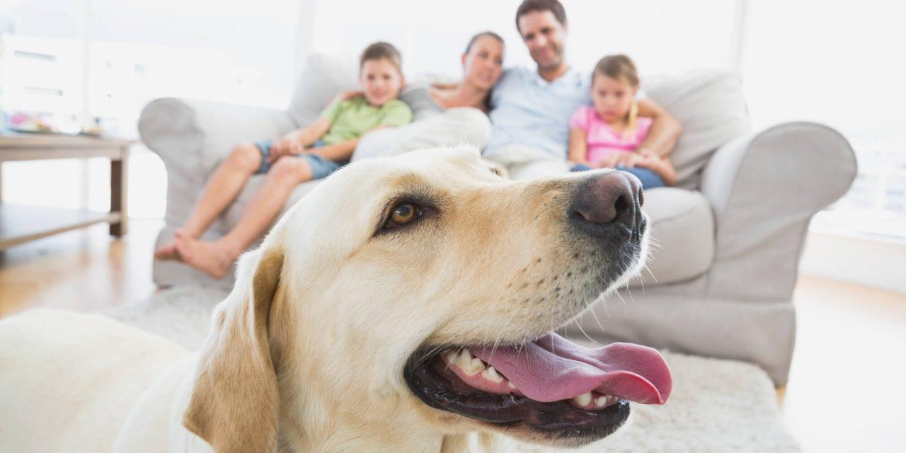 Como permitir animais no condomínio sem atritos?